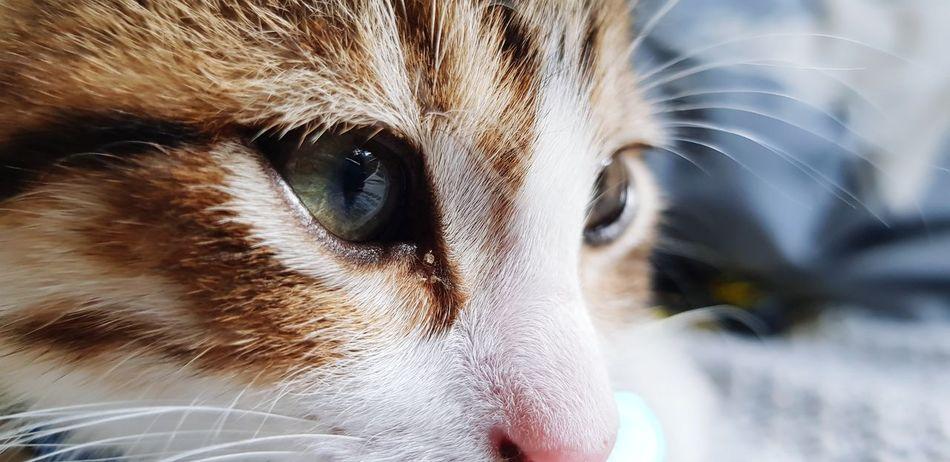 Eyelash Eyeball Eyesight Human Eye Portrait Pets Looking At Camera Iris - Eye Beauty Eye