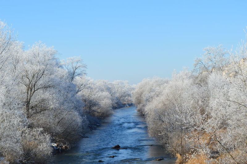 River amidst trees against clear sky during winter