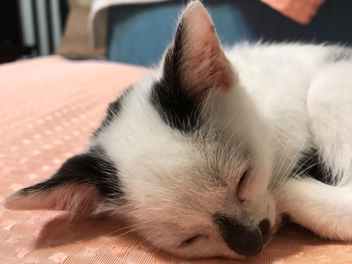 EyeEm Selects Cat Domestic Cat One Animal Pets Feline Domestic Domestic Animals Mammal Animal Animal Themes Vertebrate Relaxation Close-up Indoors  Resting Whisker Eyes Closed  Lying Down Animal Body Part Home Interior