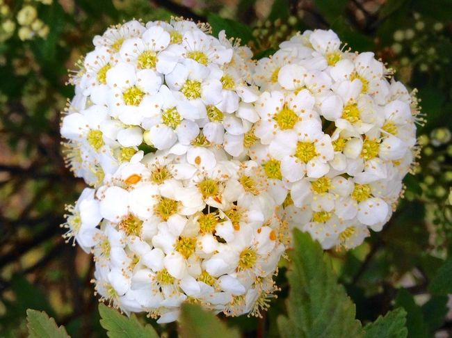 April Showers Bring May Flowers! Flower White Color Blossom Saikai City Japan Nature Close-up Petal Springtime Beauty In Nature Freshness Flower Head Day Focus On Foreground Growth Outdoors No People Plant Tree
