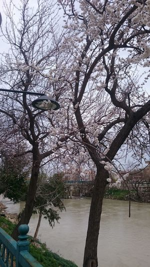 Tree Branch Nature Growth Sky Outdoors No People Beauty In Nature Tranquility Day Flower Water Göksu River Silifke Turkey
