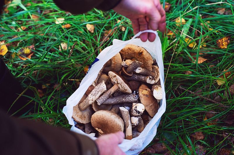 High angle view of person holding mushroom on field