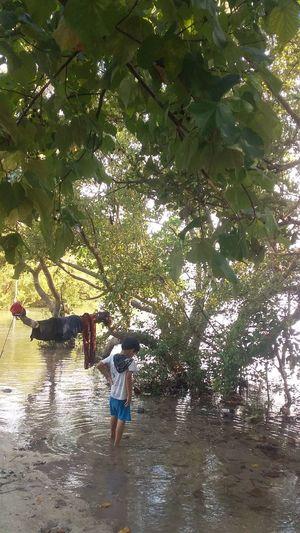 Mangrove Sea