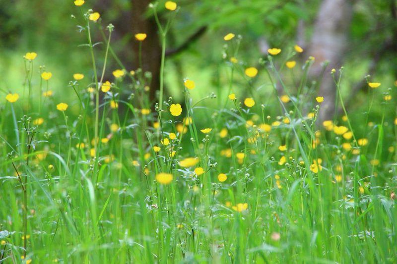 Green Nature Grassland Flowers Mint By Motorola