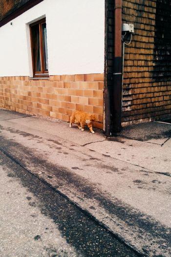 Hidden Cat Camouflage Vscocam VSCO Textures Minimalism Simplicity Village Hiddencat