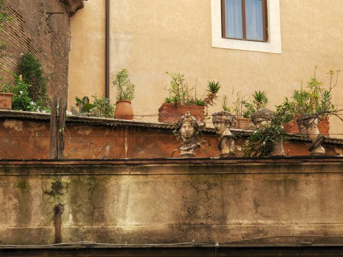 Window Architecture Building Exterior Built Structure Outdoors Day No People Plant Nature Window Box Sculpture Statue Old-fashioned City Abandoned Abandoned Places Travel Destinations House Rome Italy Roma Italia Travelling Holiday Old House