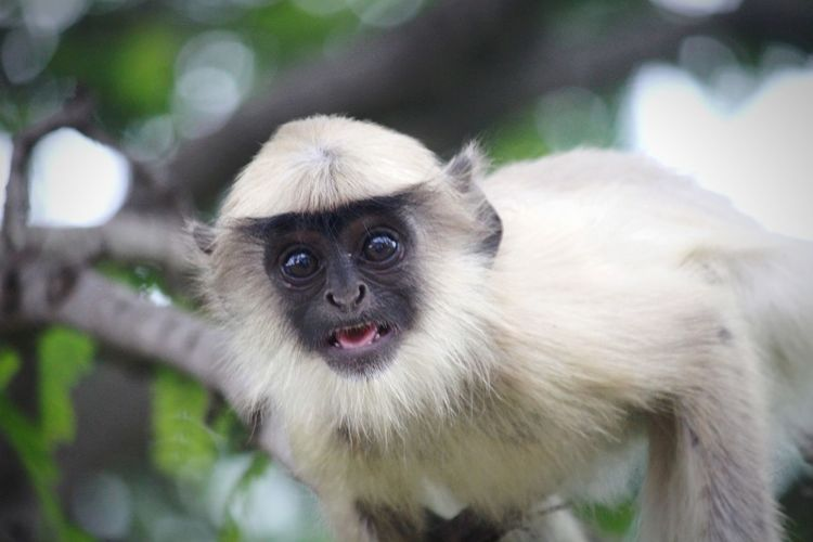 Close-up portrait of monkey baby on tree
