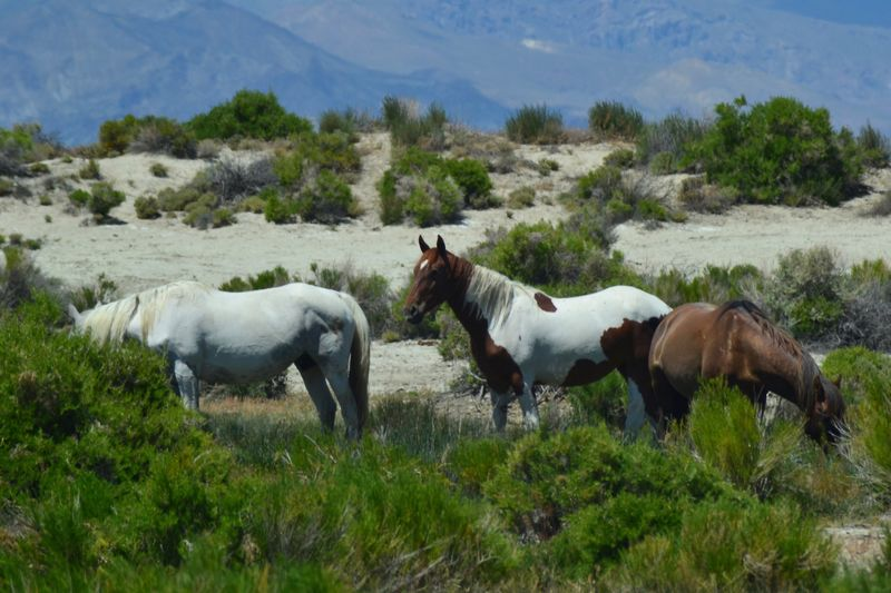 Horse Domestic Animals Animal Themes Livestock Mountain Outdoors Agriculture Day Grass No People Nature Rural Scene Mammal Sky Wildhorses Wild Desert