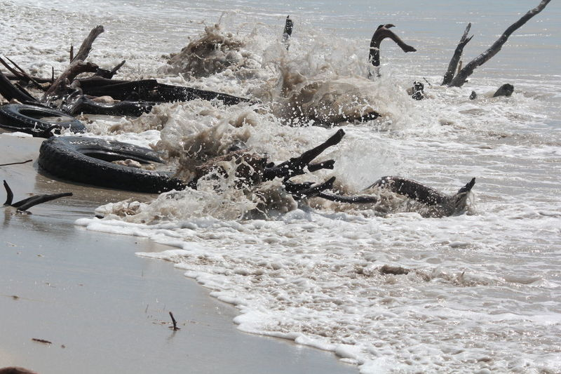 Jackson Bay, Jamaica Wave Beach Driftwood Flotsam Jamaica Logs Waterline