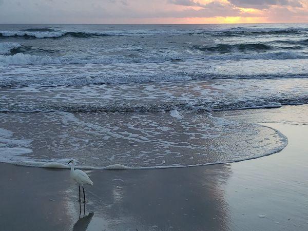 Water Sea Bird Beach Swimming Sea Life Fishing Nautical Vessel Low Tide Wave Seascape Ocean Coast Rushing Shore