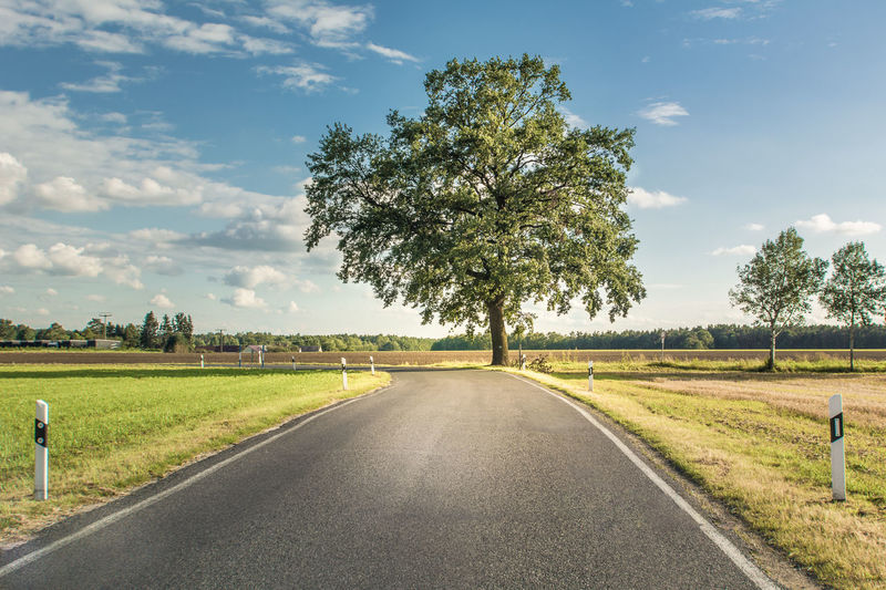 Animal Themes Beauty In Nature Cloud - Sky Day Field Grass Growth Landscape Nature No People Outdoors Road Scenics Sky The Way Forward Tranquil Scene Tranquility Transportation Tree