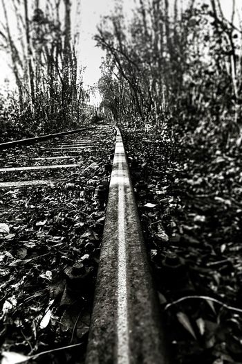 railroad Railway EyeEm Best Shots EyeEm Gallery EyeEm Selects EyeEmNewHere Plant Tree Nature Water No People Day The Way Forward Architecture Beauty In Nature Growth Outdoors Transportation Footpath Direction Tranquility Forest Diminishing Perspective Bridge Land