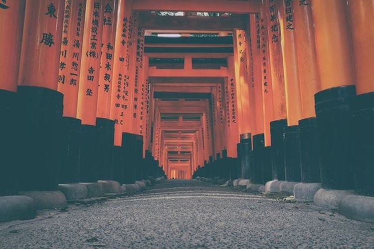 more gates, more luck. BIG gates, BIG luck. Japan Kyoto Inari Shrine TORII 稲荷神社 京都 Cherryblossom Sakura FujiX100T Fuji