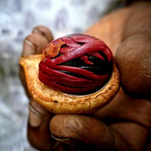 """Todas las semillas se pudren al principio, pero algunas germinan...Un mundo sin esperanza es irrespirable."""",André Malraux SriLanka Lumix Panasonic Lumix Species Organic Nuezmoscada Jardinsecreto Especies A New Beginning Red Close-up Sweet Food"""