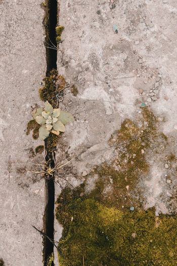 Lust for life / The city against nature 8. December the, on the street minus ten, and it grows in the crevice between the concrete slabs of heating. No People Outdoors Day Close-up Nature Growth Abstract Nature Minimalism Concrete Life Plants Lust For Life Moss City Adapted To The City