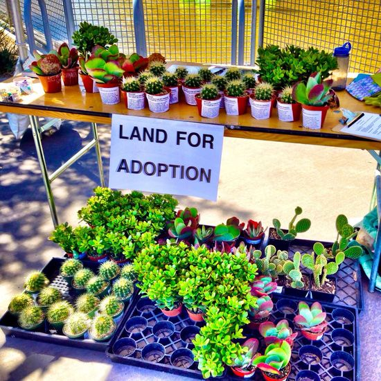 Land For a Adoption by Vaughn Bell at Scottsdale's Canal Convergence Festival in Scottsdale, Arizona Scottsdale Public Art Eyeem Phoenix Meetup2 Theartofiphoneography Canal Convergence