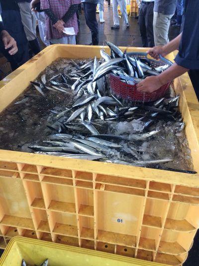 Fish Market Fish サンマ