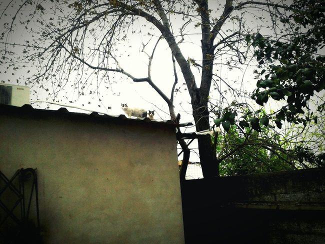 PAISAJE URBANO Gato En El Tejado Longchamps Los árboles Del Presente Eso Que Se Mueve