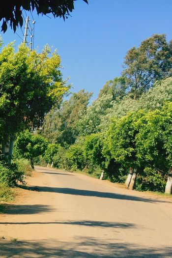 🌳✨ Road The