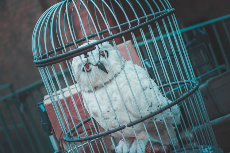 Close-up of white owl in cage