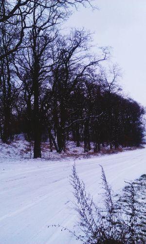 Snow ❄ Snow Day Photooftheday Landscape