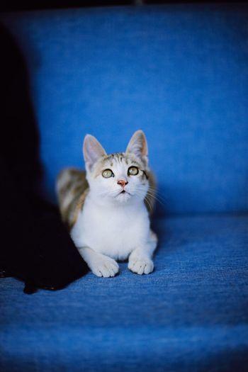 Young and curious Curious Curious Cat Cat Small Cat Lookingup