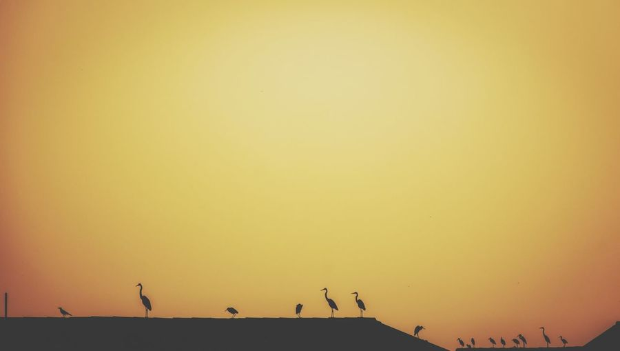 Silhouette birds flying against clear sky during sunset