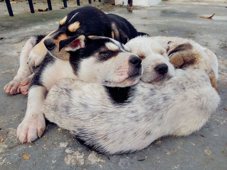Cuties. Dog Pets Animal Themes Domestic Animals Sand Mammal Beach Day Outdoors No People Portrait Close-up Puppy Puppies Puppylove 😘😍🐶