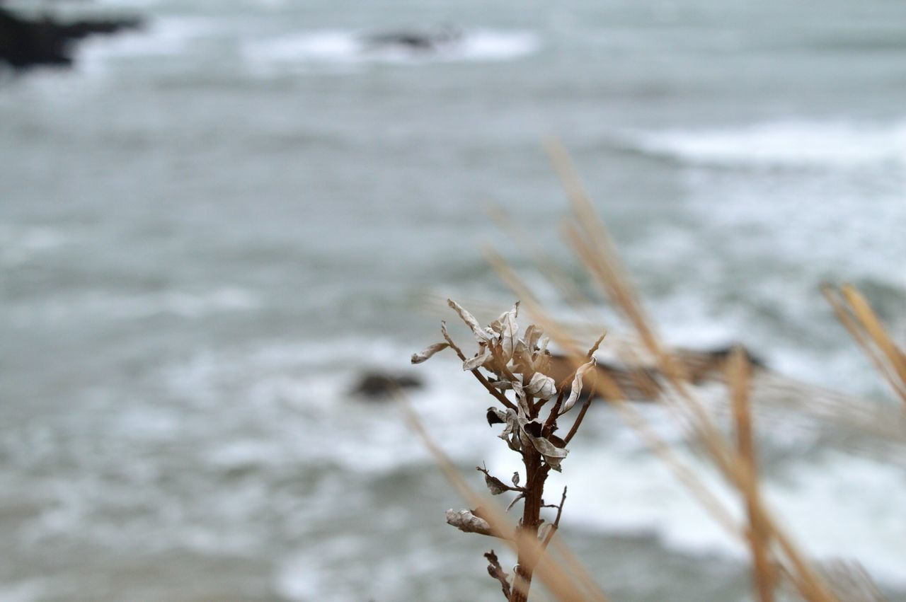 day, focus on foreground, nature, water, close-up, no people, animal, animal themes, sea, land, animals in the wild, one animal, outdoors, animal wildlife, beauty in nature, beach, selective focus, tranquility, motion, wilted plant