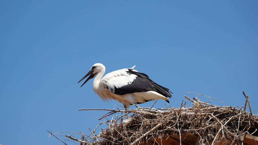 Low angle view of bird in nest against clear sky