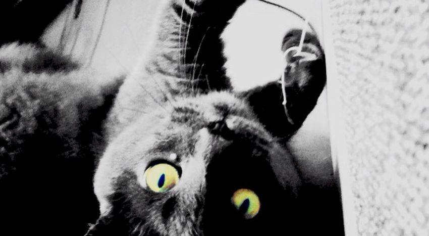 B&w B&w Photography Animal Animals Cat♡ Lovely Cats