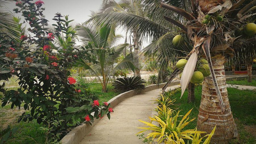 Palm trees against plants