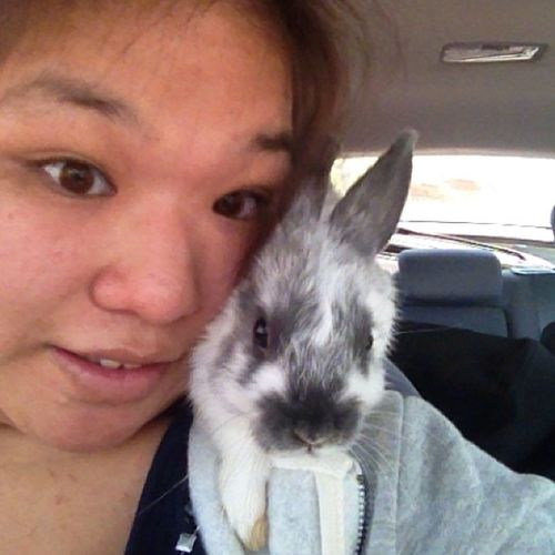Chilled w me for a bit while I drove 😍 Bugs Bobby SoCurious Grayandwhite Netherlanddwarfbunny Hessuchaflirtandaffectionate