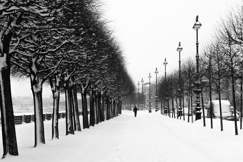 Snow Winter Tree Cold Temperature Plant Nature Street Street Light Footpath Architecture Covering Day Treelined In A Row Direction Bare Tree The Way Forward Walking Sky Outdoors Snowing