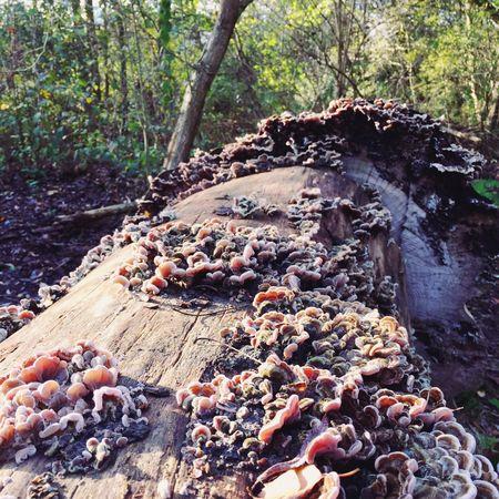 Shroom EyeEm Nature Lover Mushroom Hunting Groovy_shrooms