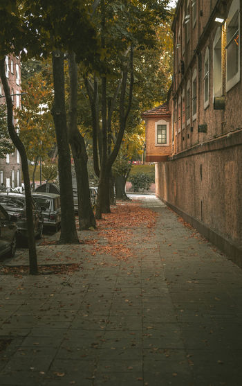 Tree Plant Architecture Built Structure Footpath Building Exterior Street The Way Forward Direction Nature City No People Outdoors Building Trunk Tree Trunk Sidewalk Day Growth Empty Alley Autumn Autumn colors Autumn Leaves
