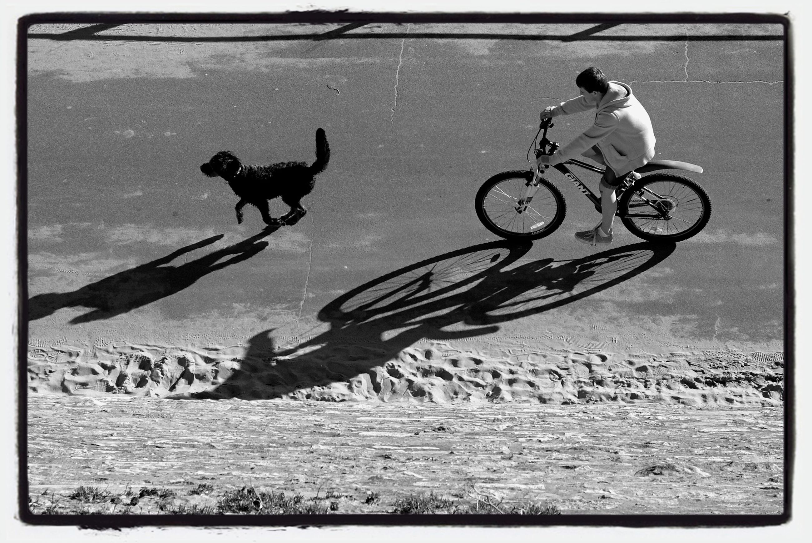 transfer print, animal themes, domestic animals, auto post production filter, bicycle, one animal, mode of transport, transportation, land vehicle, pets, mammal, full length, two animals, outdoors, dog, day, field, stationary, no people, riding