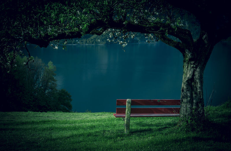 Scenic View Of Bench With Lake And Trees
