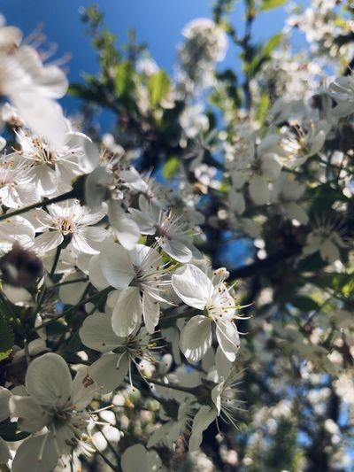 Красота во всём Plant Growth Flower Tree Flowering Plant Fragility Close-up Focus On Foreground Beauty In Nature Springtime No People Day Blossom White Color Freshness