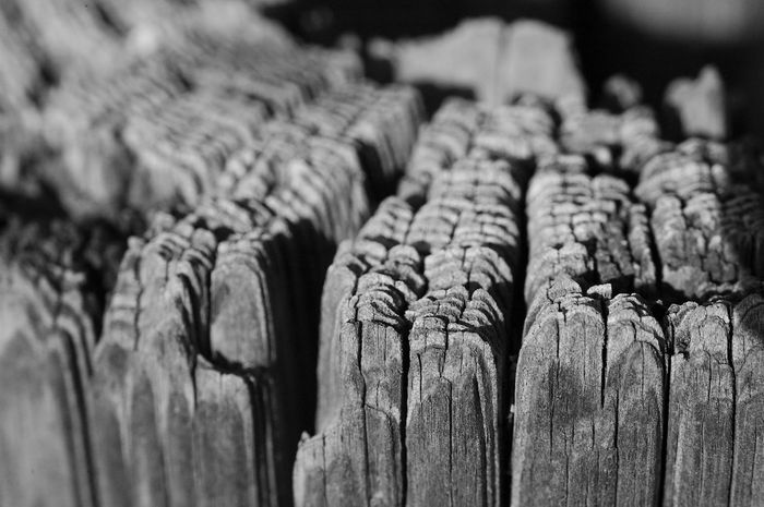 Decaying Tree Trunk In A Row Close-up No People Wood - Material Focus On Foreground Backgrounds Decay Trunk Blackandwhite Black And White