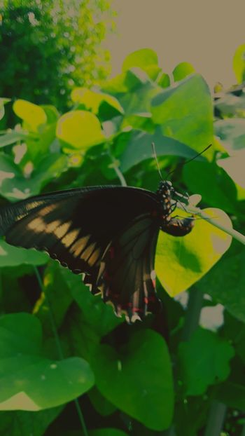The beauty of nature Spread Wings Perching Full Length Leaf Butterfly - Insect Insect Animal Wing Animal Themes Close-up Plant
