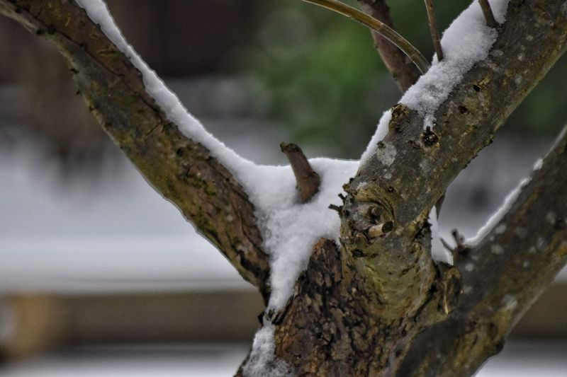 Snow on tree EyeEm Selects Focus On Foreground Tree No People Close-up Day Branch Outdoors Tree Trunk Nature