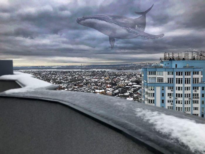 Skyline and