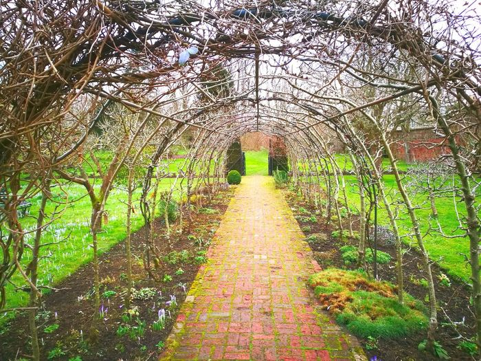 Landscaping Soil Garden Design Arboretum Public Garden Early Spring Garden Feature Brick Path Trained Fruit Trees Tree Tunnel Day Tree Grass Growth Nature Outdoors No People