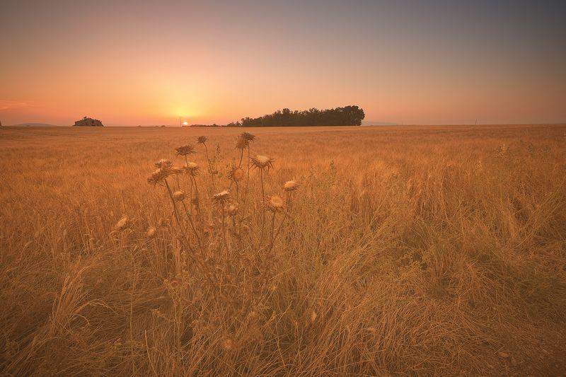 wheat field on