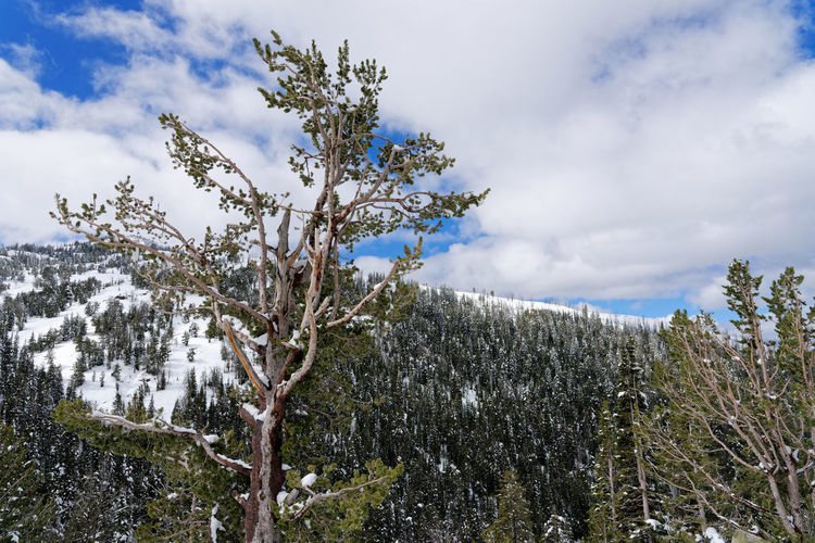 Scenic view of snow covered land and trees against sky
