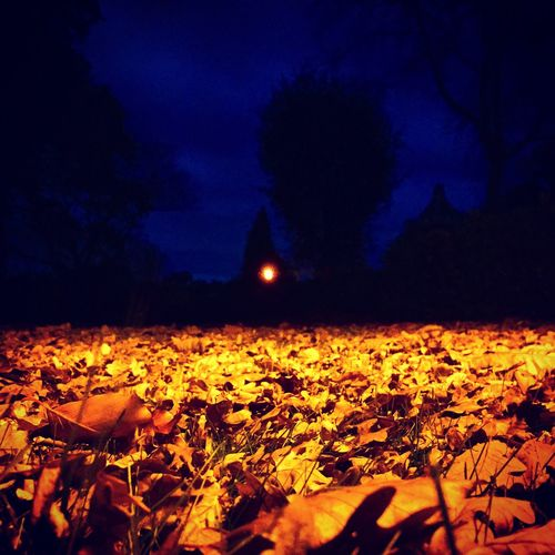 Night Outdoors Yellow Leaves in Autumn