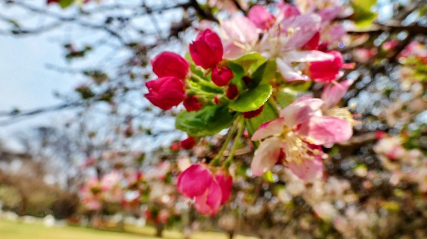 Spring blossoms Flower Head Flower Tree Pink Color Petal Springtime Close-up Plant Blooming Plant Life Bud