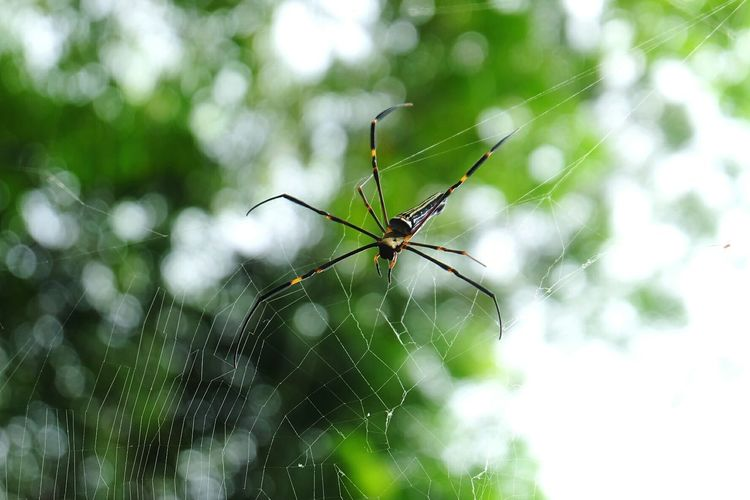 Animal Nature Spider Web Animal Leg Complexity Insect Spider Web Spider Survival Close-up Animal Themes Wire Wool Animals Hunting