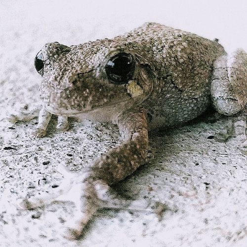Frog. No People Animal Wildlife One Animal Animals In The Wild Close-up Animal Themes Day Nature Indoors  Mammal Outdoors Beauty In Nature UnderSea EyeEmNewHere Be. Ready.